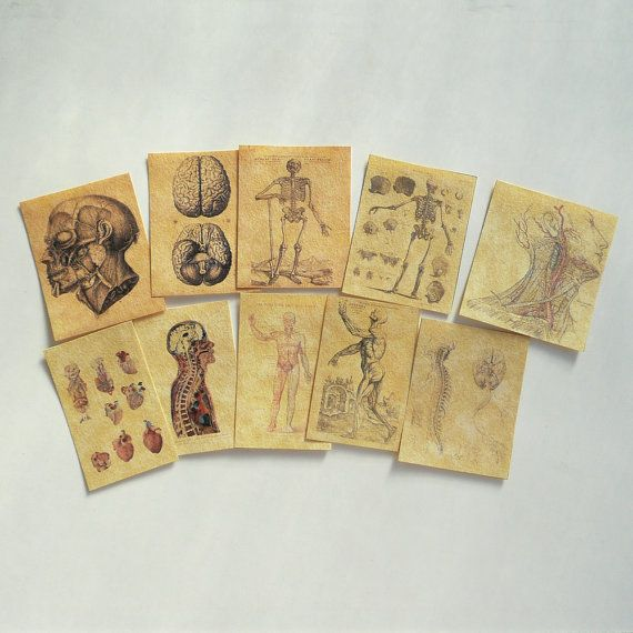miniature anatomy posters for library collection #miniaturemedical