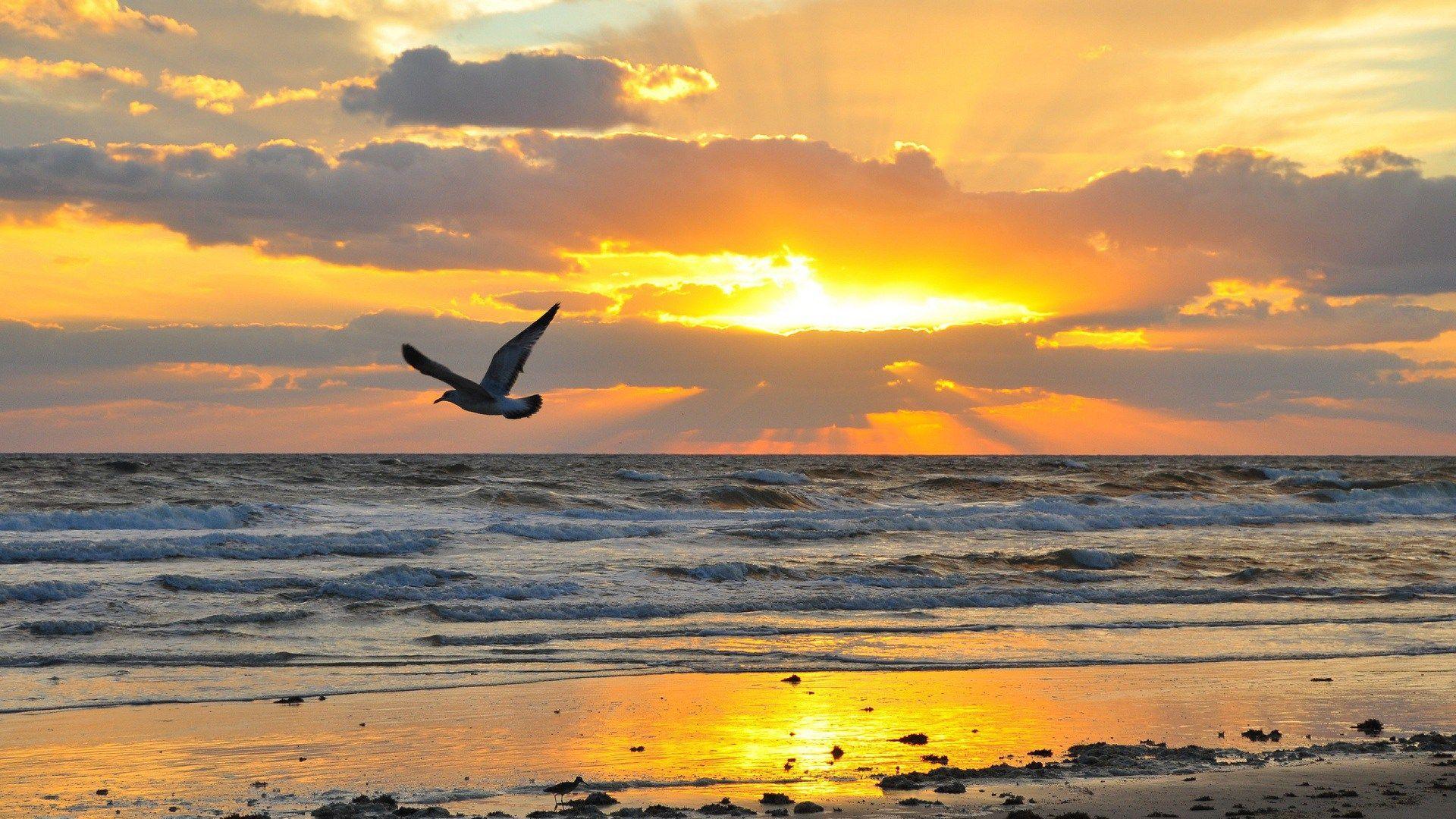 Excelente Fotos Aves Volando Cielo Sugerencias En 2020 Con