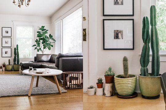13 Ideas Para Decorar El Interior De Tu Casa Con Plantas El - decoracion de interiores con plantas