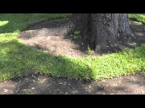 St Augustine Grass Care Florida Fertilizer Lawn Maintenance Schedule Lawn Maintenance Schedule How To Lay Sod Grass Care