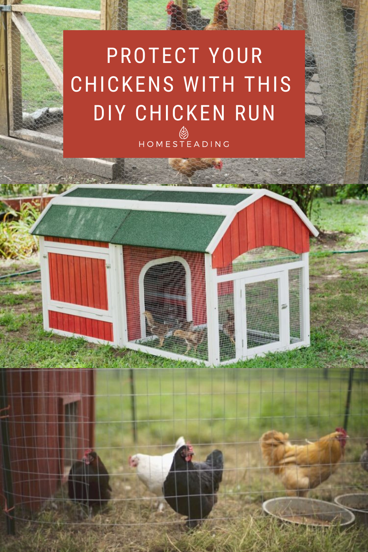 Predator Proof Diy Chicken Run Project For Your Backyard Chicken