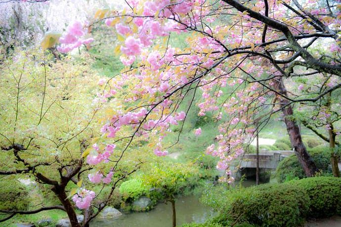 Japanese Cherry Blossom Garden Wallpaper Japanese Water Gardens Blossom Garden Cherry Blossom Wallpaper