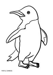 Disegni Di Pinguini Da Stampare E Colorare Disegni Coloring