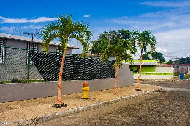 Jardines de Vega Baja, Calle Jardin del Caribe (Edgar Freytes)