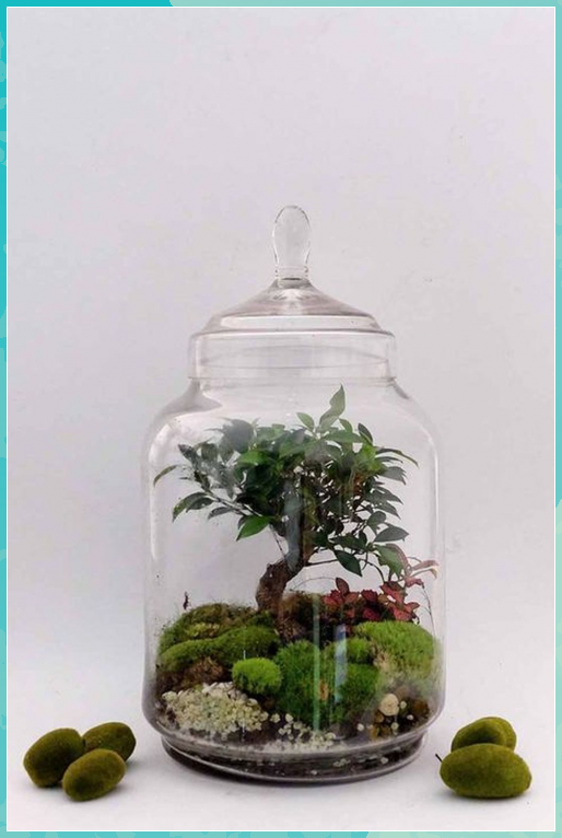 40 Stylish Bonsai Terrarium Ideas With Minia Miniatur Garten Glas 40 Stylish Bonsai Terrarium Ideas W Terrarium Pflanzen Miniaturgarten Terrarium Ideen