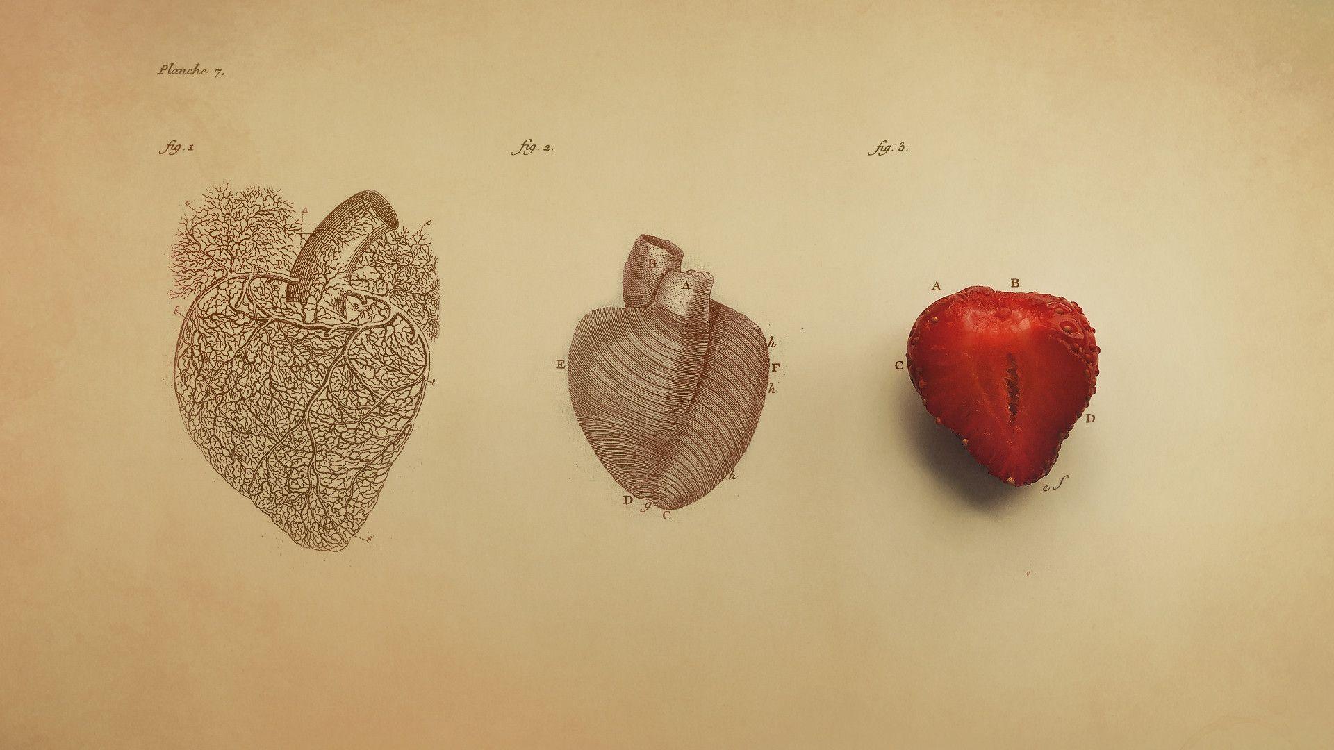 Kris Kuksi Psychotropic Comparative Anatomy Wallpaper Walldevil