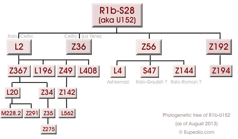 Phylogenetic tree of haplogroup R1b-S28/U152 (Y-DNA) - Eupedia