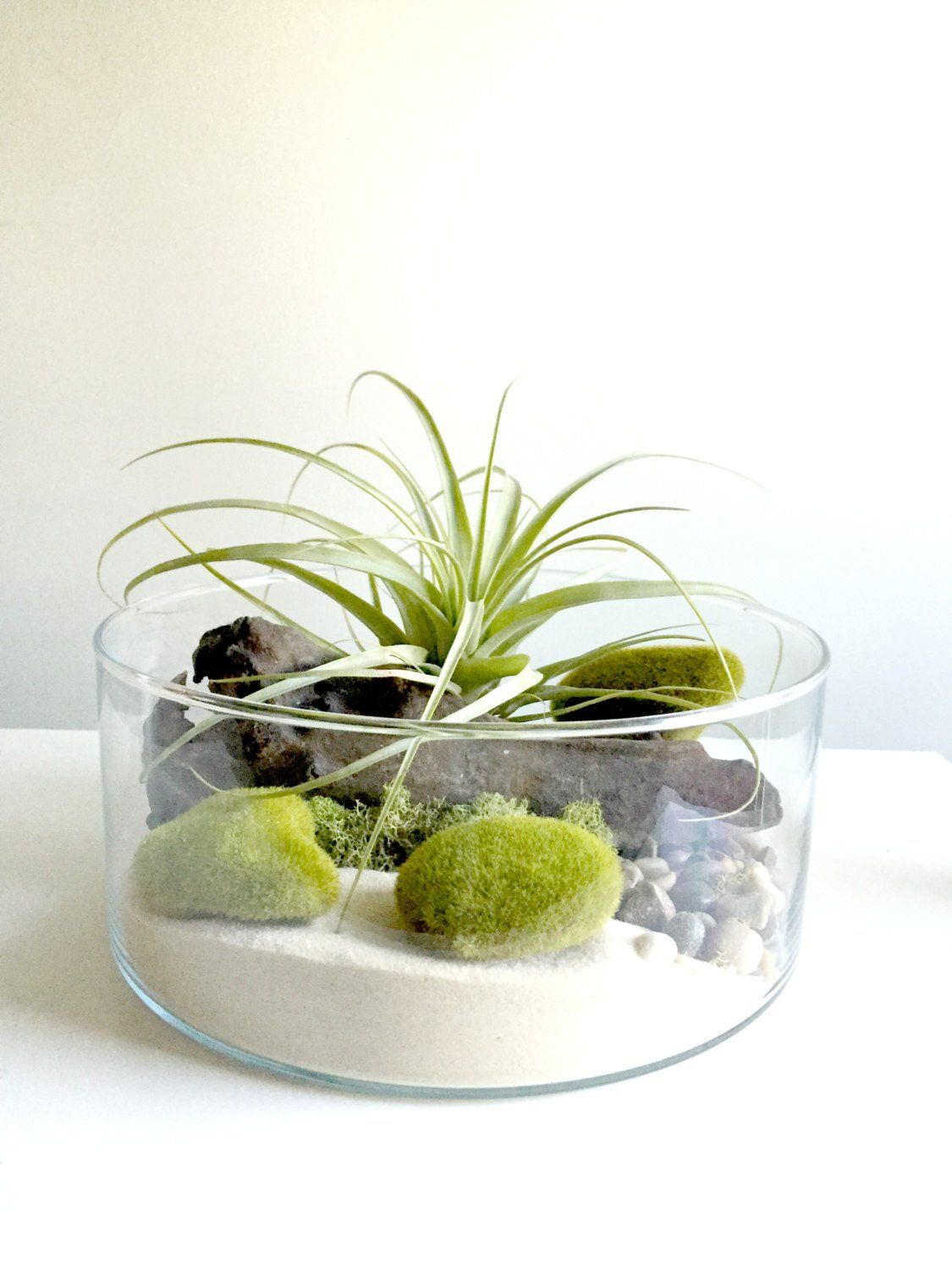 Large air plant terrarium glass vase Living by (с