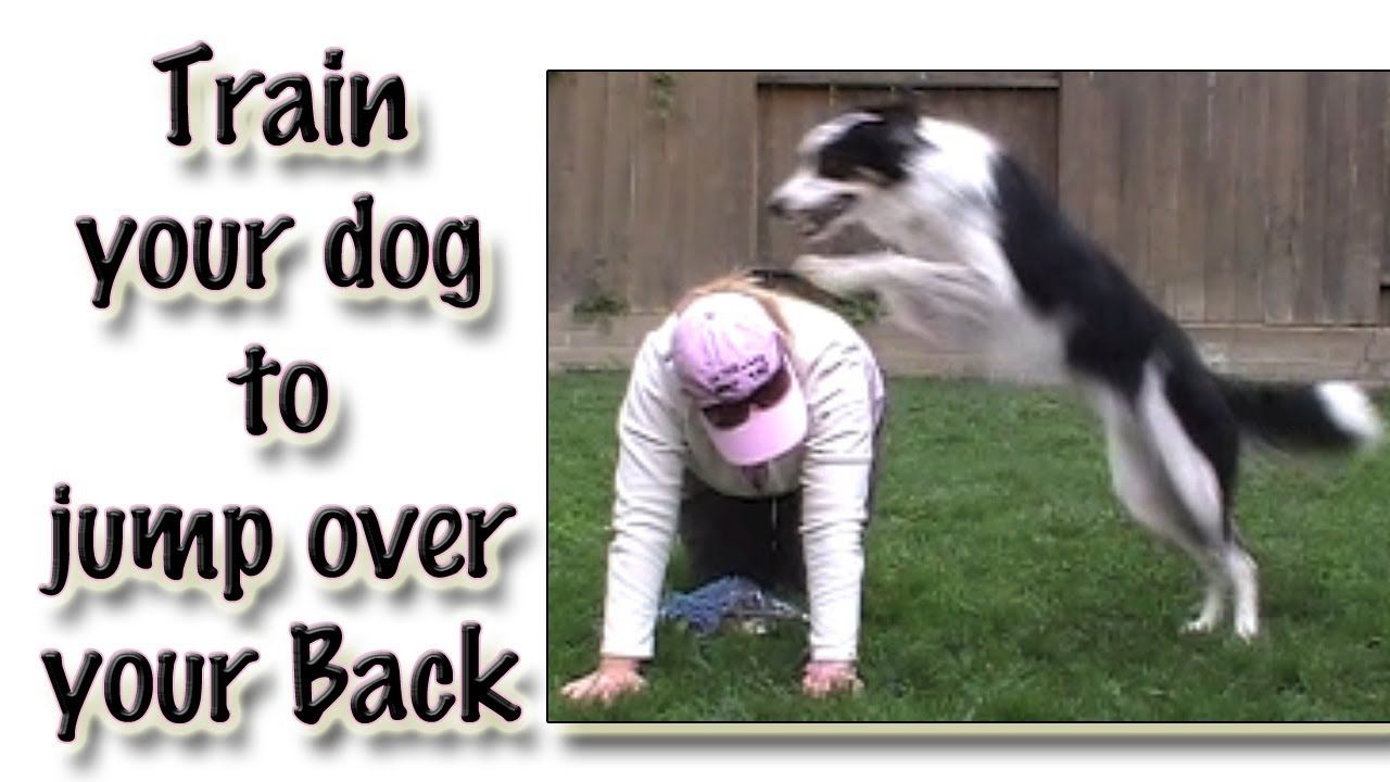 Jumping Over Your Back Clicker Dog Trick Training In 2020 Dog
