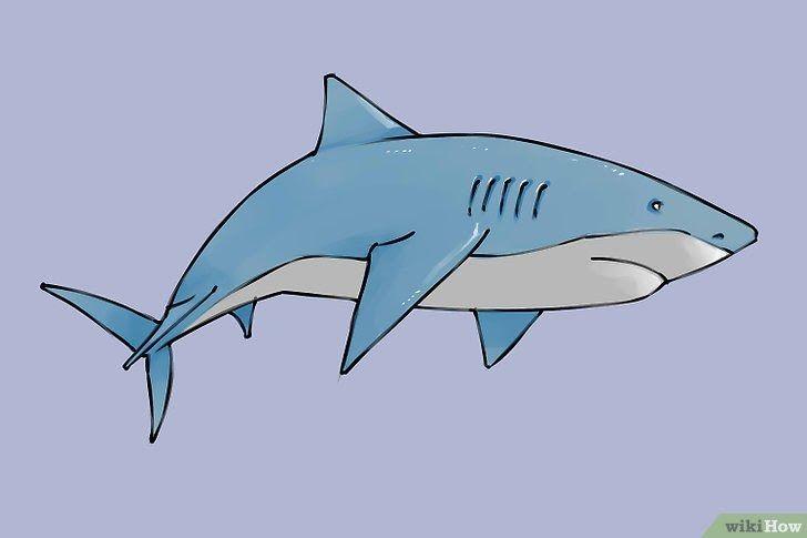 30 Gambar Kartun Ikan Berwarna 4 Cara Untuk Menggambar Ikan Hiu Wikihow Download Si Ikan Biru Dory Mencarikan Keluarga Gambar Hewan Cara Menggambar Megalodon