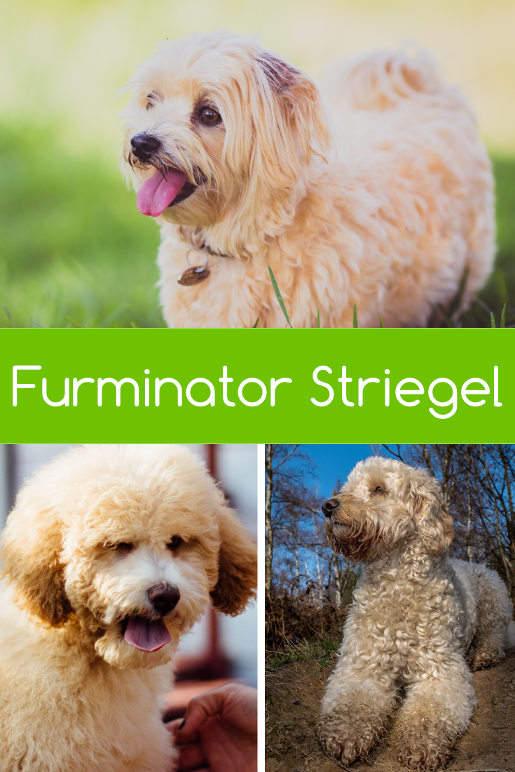 Hunde Pool Pflege Furminator Striegel Für Hunde Animals And Pets Dog Training