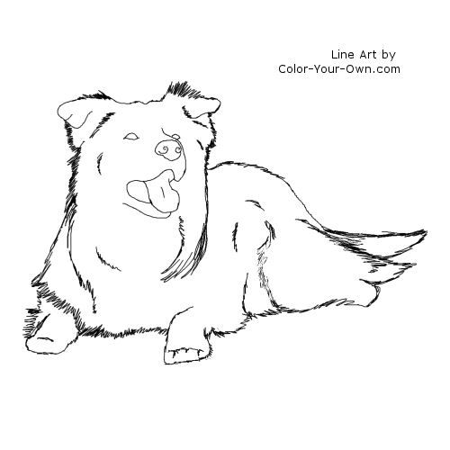 Border Collie Dog Laying Down Coloring Page Border Collie Border Collie Dog Collie