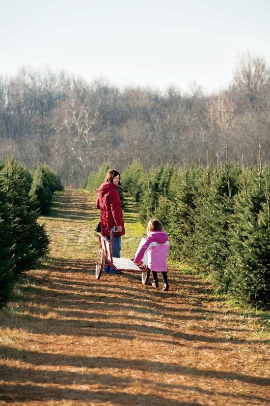 Start a Christmas Tree Farm | GRIT Magazine | Home Business ...