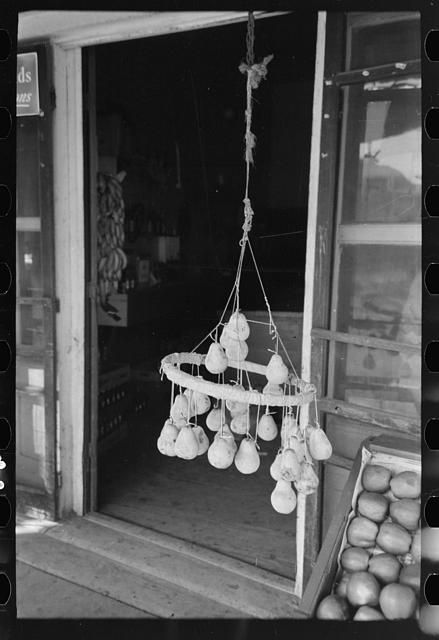 Pears hung from hoop by means of string. This is one method of keeping pears from rotting. New Iberia, Louisiana