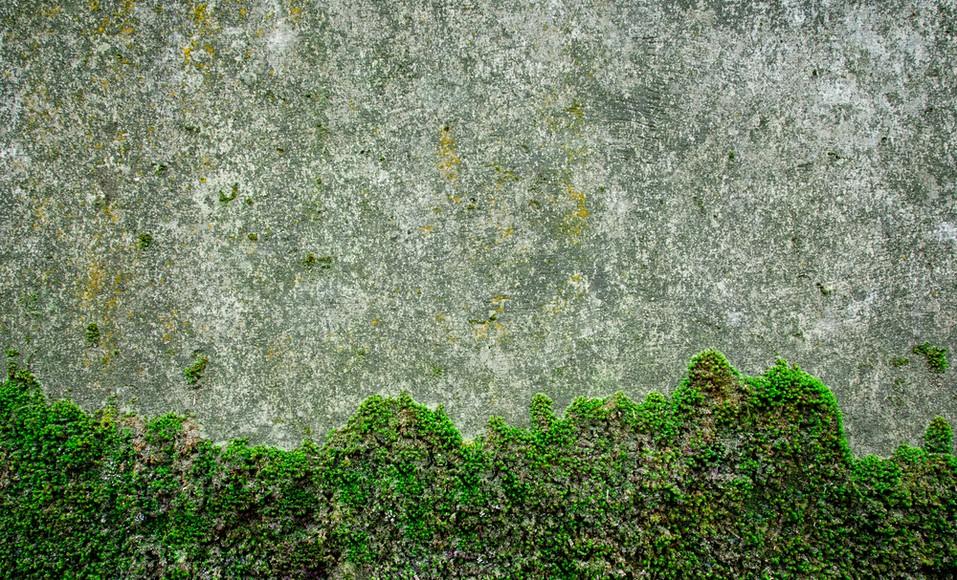 17 Astuces Ecologiques Pour Un Retirer La Mousse Et Le Lichen Il N Est Pas Rare De Retrouver De La Mousse Et Du Nettoyer Terrasse Mousse Produit Anti Mousse