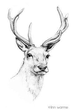Resultado De Imagem Para Cervos Tumblr Desenho Dos Cervos