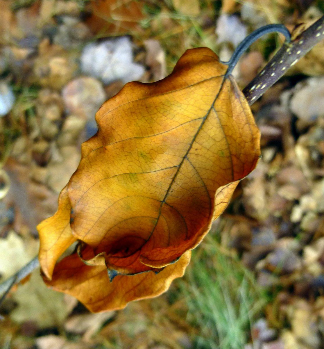 Things I've Seen - January 7, 2015 by New Hampshire Garden Solutions