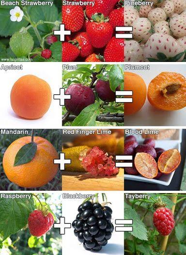 Weird Hybrid Fruits 11