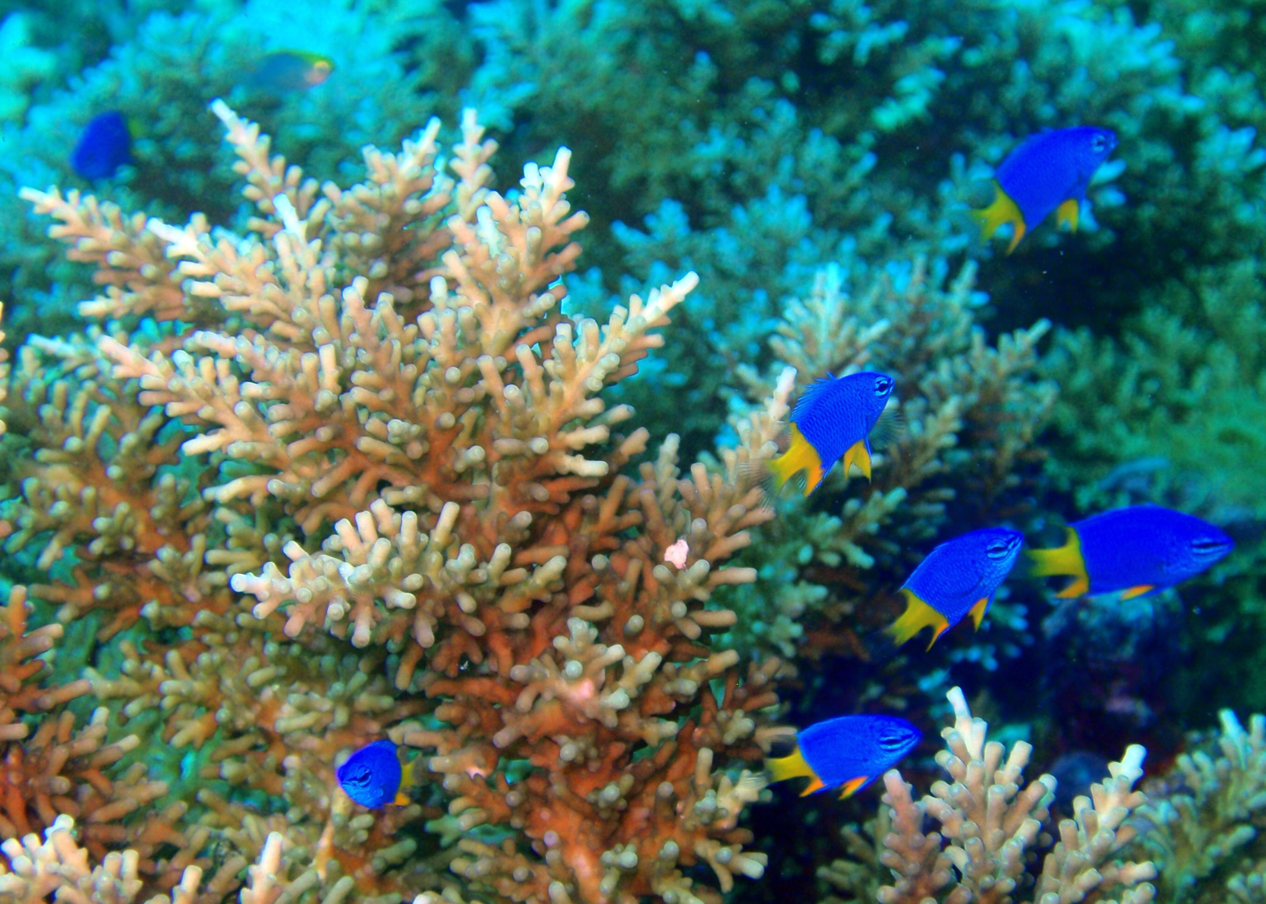 coral reef pictures noaa moves to protect corals ocean scenes