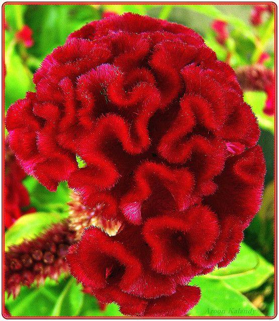 Brain Flower Explore Flowers Strange Flowers Planting Flowers