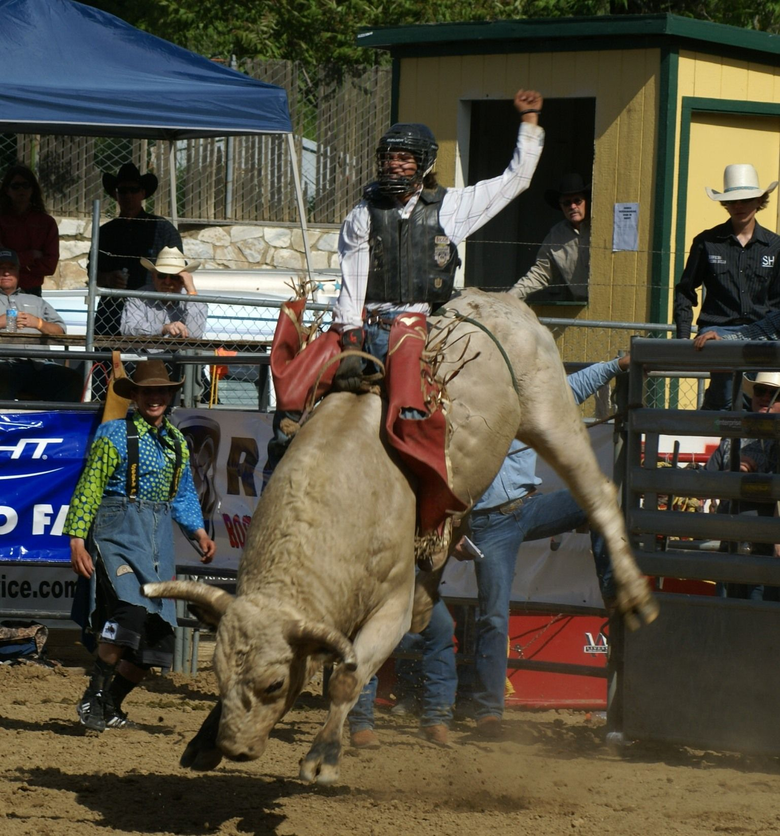 Bull Riding At The Wild West Stampede In Auburn Ca Bull