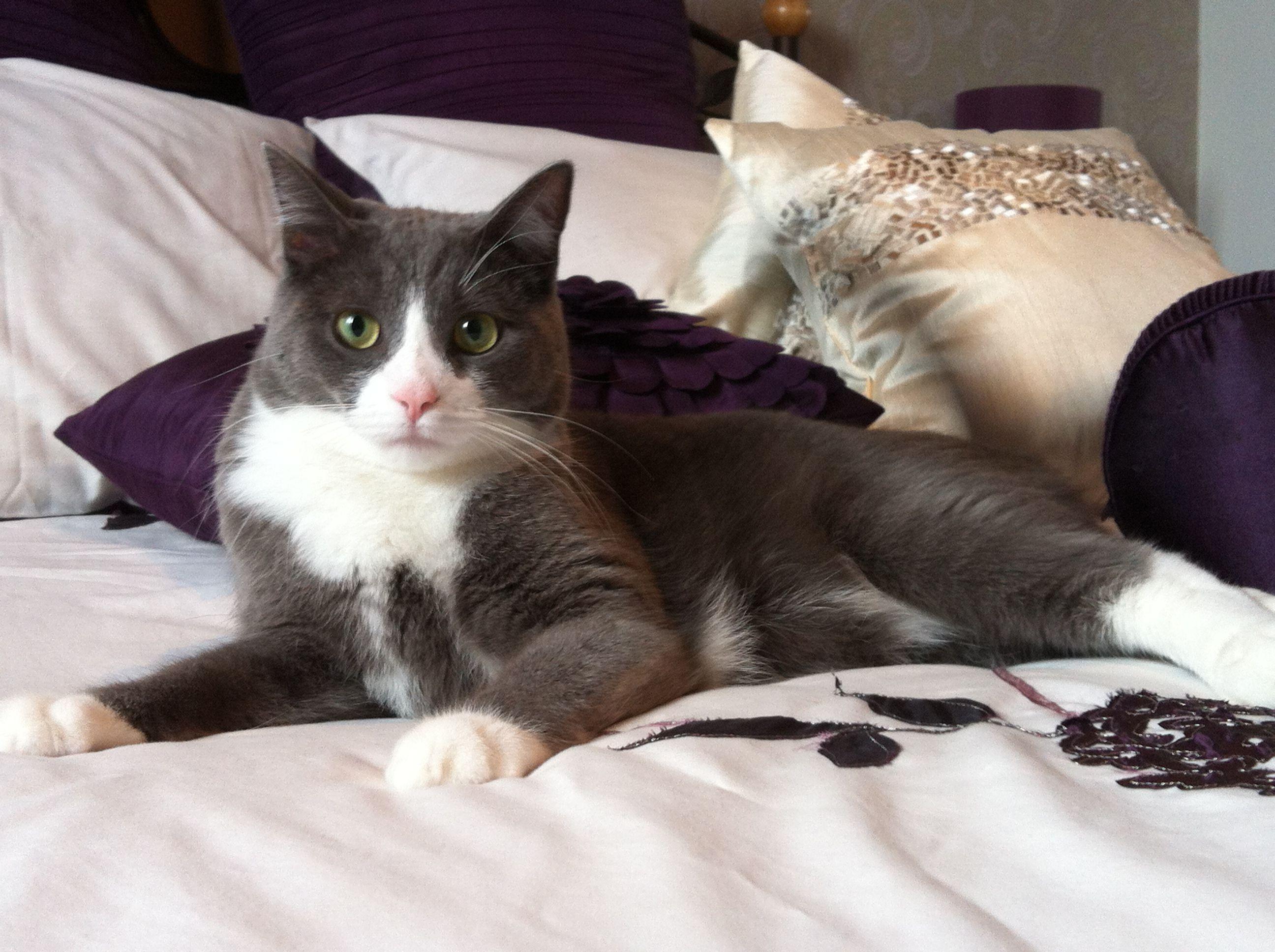 Mon chat Roméo | Cute cats, Cats, Cat s