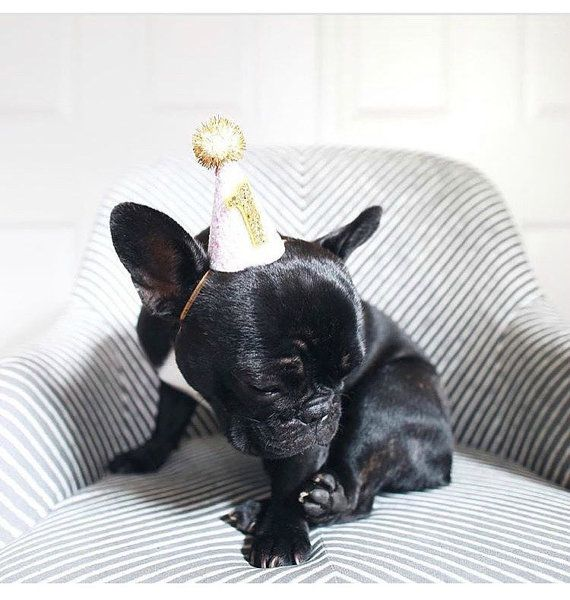 727c5335051 Dog Party Hat Animal Hat Birthday Hat by BustersPartyShop on Etsy ...