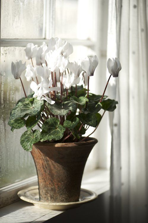 A Great Winter Houseplant Option From Inside The Unexpected