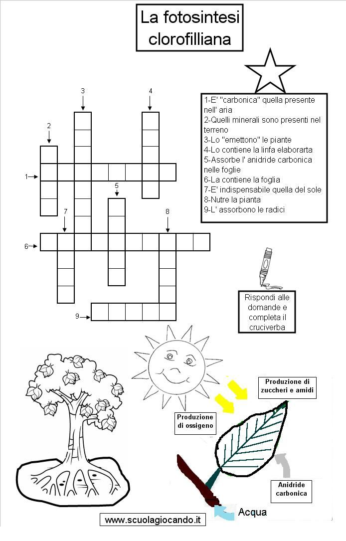 La Fotosintesi Clorofilliana Scienze Scienza Matematica E