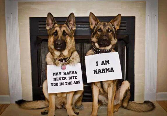 Karma Humor Dogs Karma Dog Activities Funny