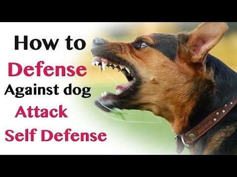 How To Defend Against Dog Attack Self Defence Youtube Dog