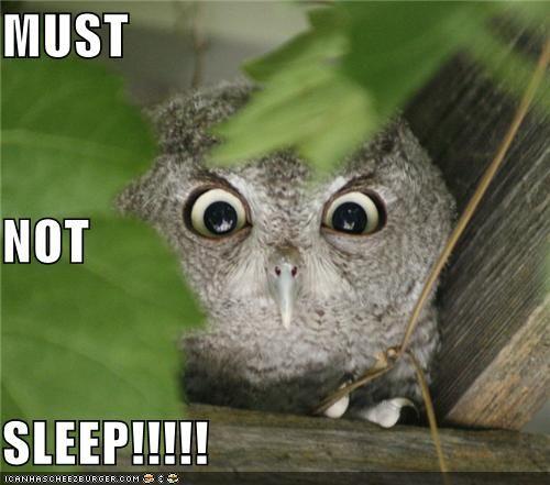 owl humor reading - photo #13