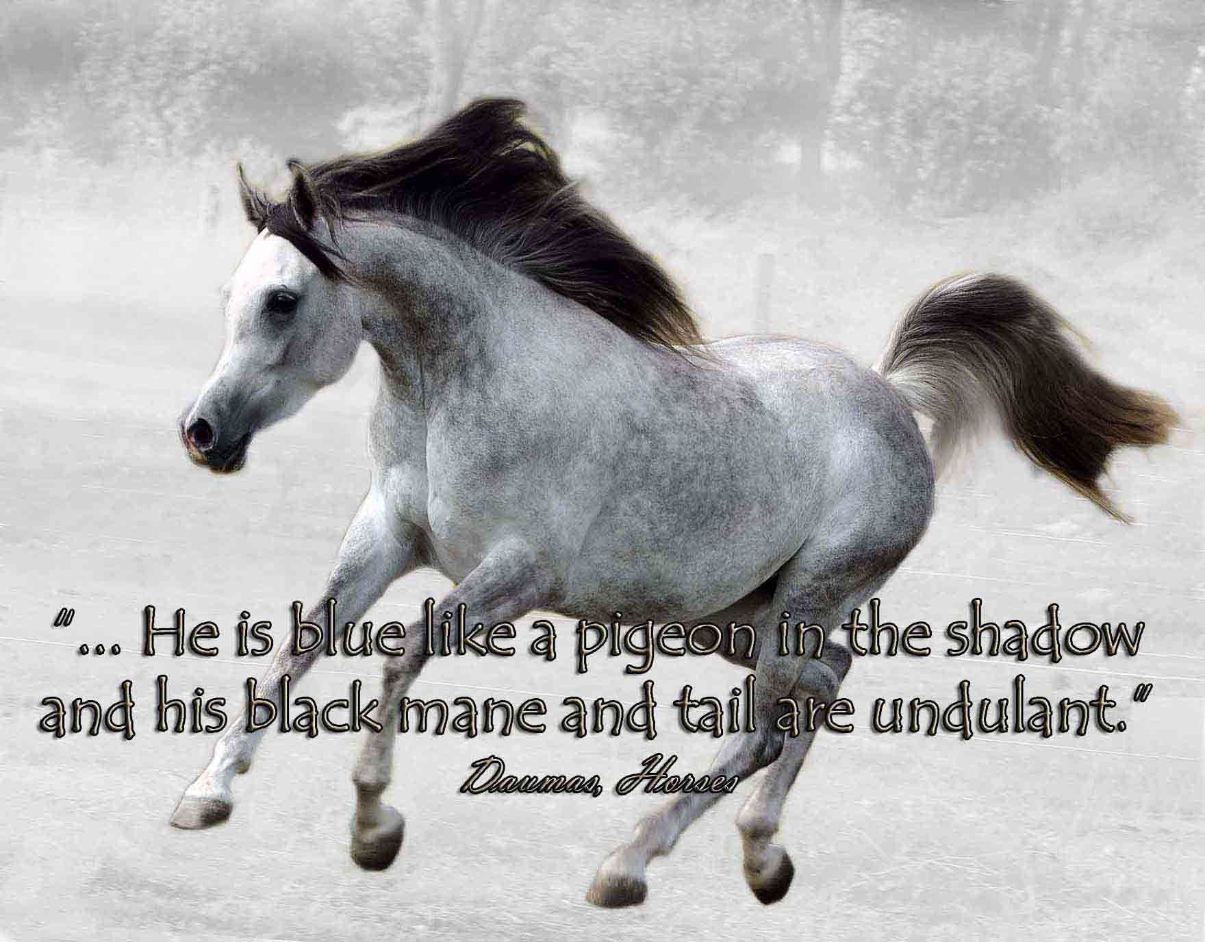 horse quotes and poems that move you - Google Search ...