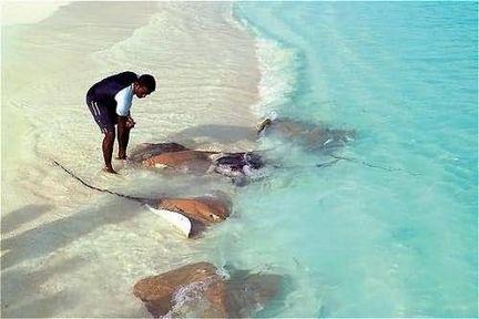 Make some new friends in the Maldives... http://biguseof.com/travel