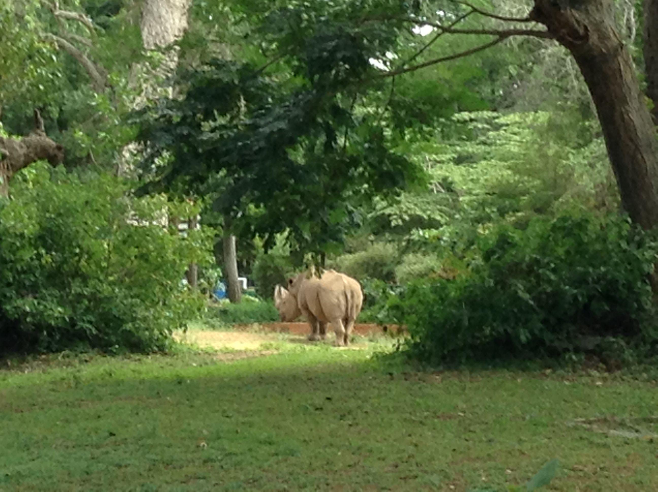 Shy Guy 3 Mysore Zoo Officially The Sri Chamarajendra Zoological Gardens Mysore Zoo Zoological Garden Zoo