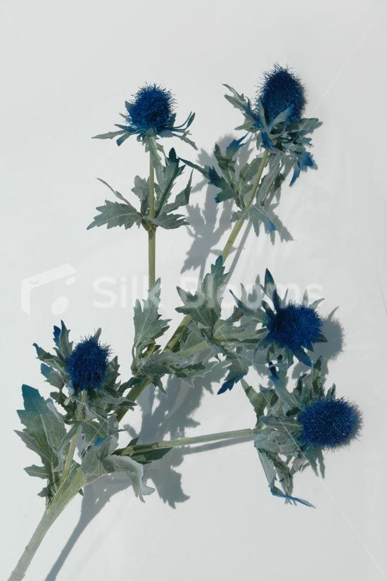 Artificial Dark Blue Scottish Sea Holly Thistles Online From Silk Blooms At Just It Is An Wedding Flowers In