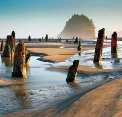 Oregon's Ghost Forest | VIA Magazine