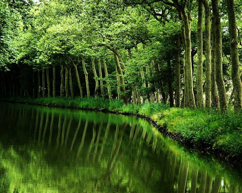 Arching, forest, green, lush, River, trees