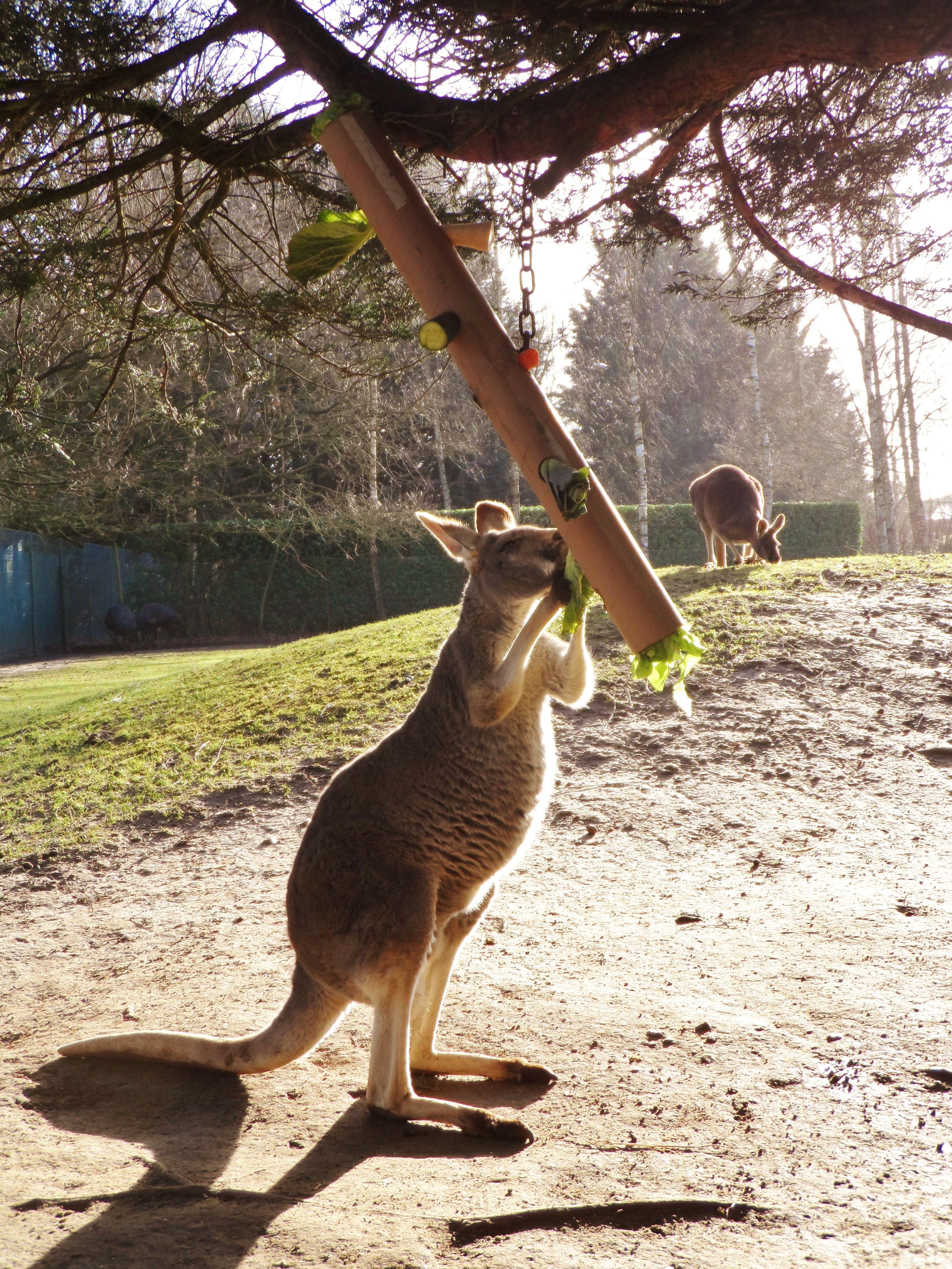 Kangaroo Macropod Enrichment Hanging Tube With Vegetables Wedged