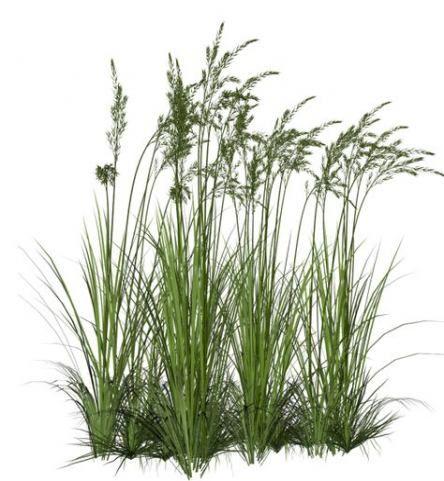 Super Plants Texture Png Ideas -   13 plants Texture landscapes ideas