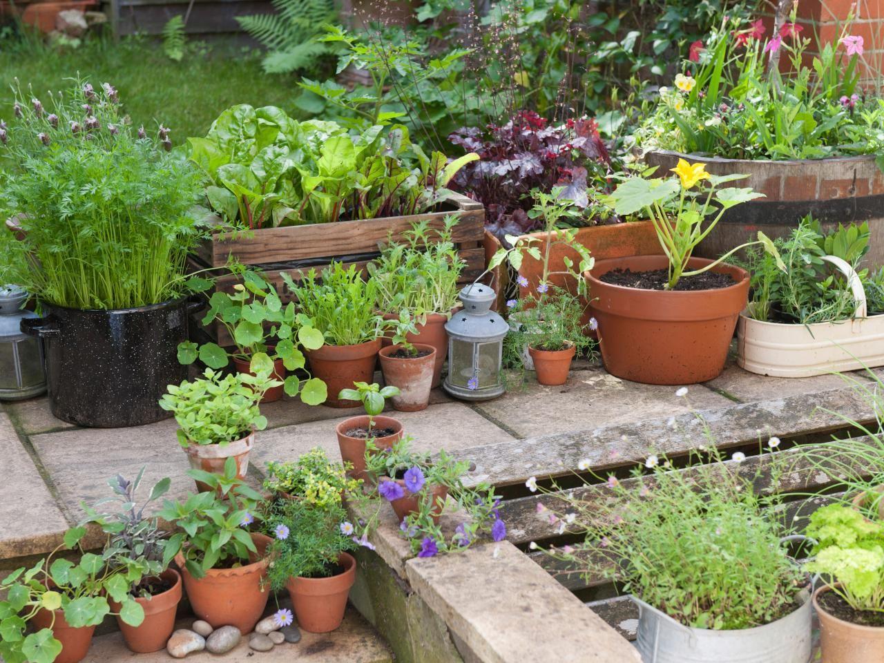 Edible Displays: Mini Herb Garden