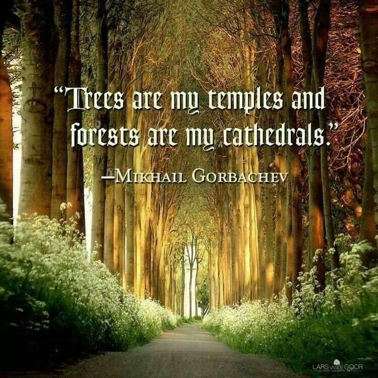 Forest Quotes: The Trees Are My Temple And The Forest Is My Cathedral