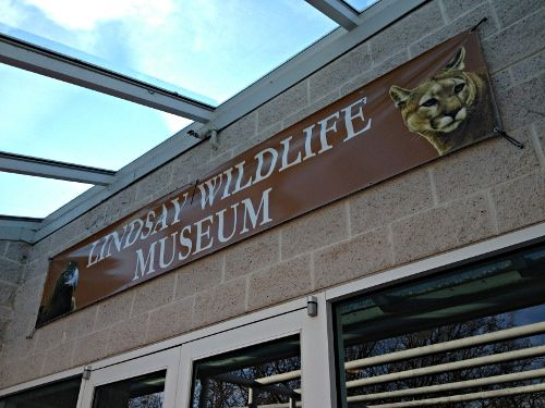 lindsay wildlife museum walnut creek ca