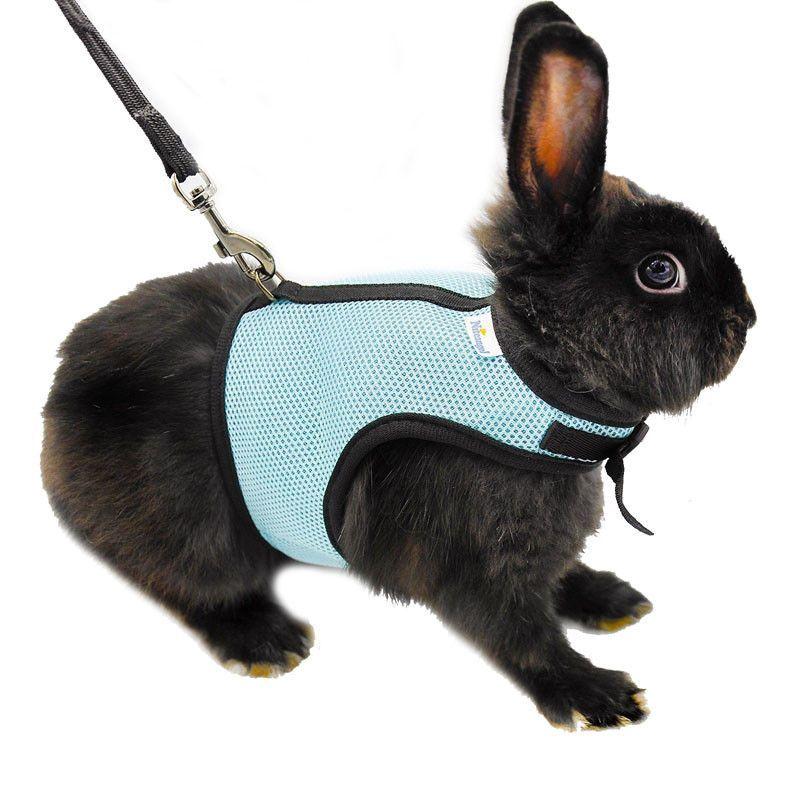 3 Colors Hamster Rabbit Harness And Leash Set Ferret Guinea Pig ...