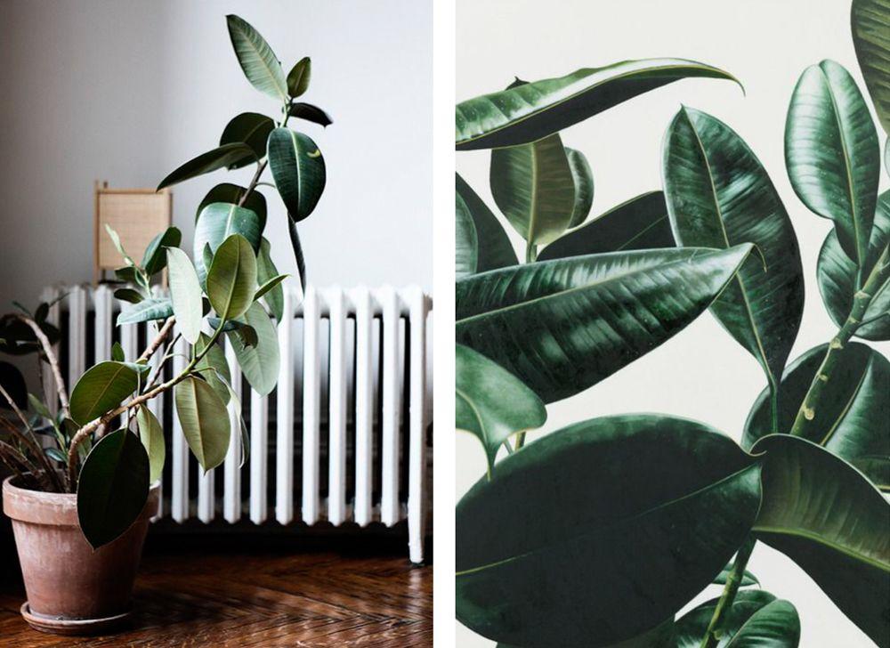 Indoor Plants 101 Something Kindred Blog Nicole