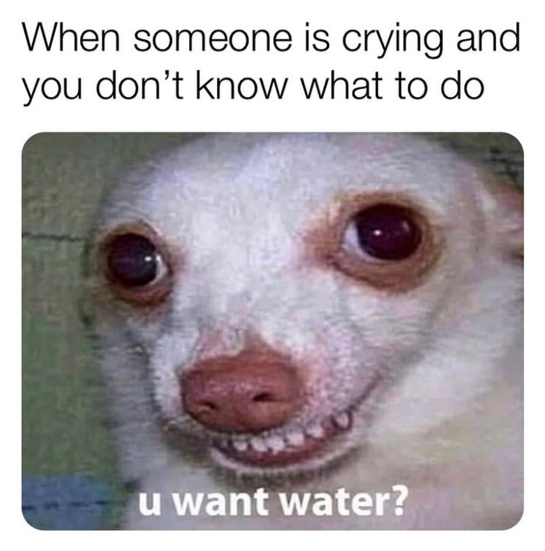 30 Relatable Memes To Brighten Your Day The Xo Factor In 2020 Funny Instagram Memes Funny Memes Tumblr Funny Animal Jokes