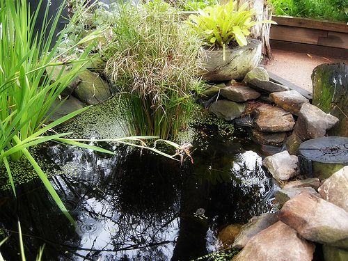 Build a classroom frog pond   Small water gardens ...
