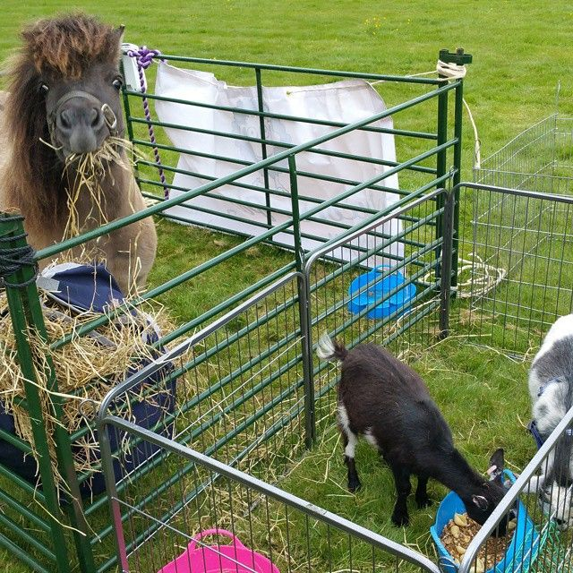 Wycomb Pastures Mobile Petting Farm - Interactive