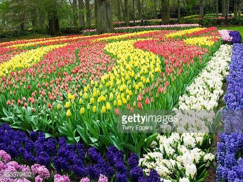 Resultado de imagen para flowers in the forest