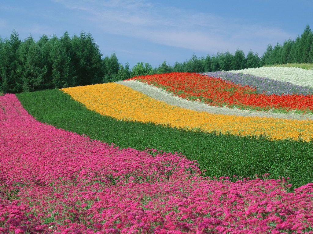 Most Beautiful Wallpaper For Desktop Beautiful Flowers Garden Most Beautiful Flowers Amazing Gardens